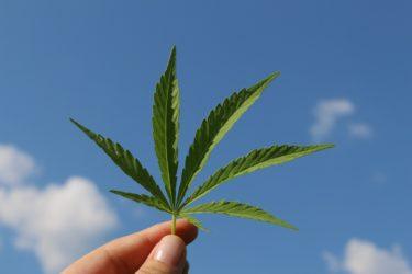 カナダにはカンナビス(大麻)のお店が普通にあります【NSLC Cannabis】ハリファックス